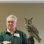 Sylvester, the Great Horned Owl!