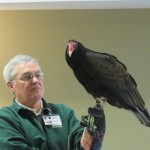 Earl (the female) turkey vulture and the star of the show!