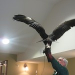 Look at that 6ft. wingspan!